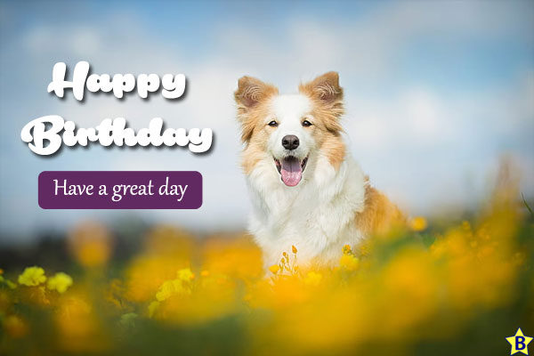 Happy Birthday Dog Images collie