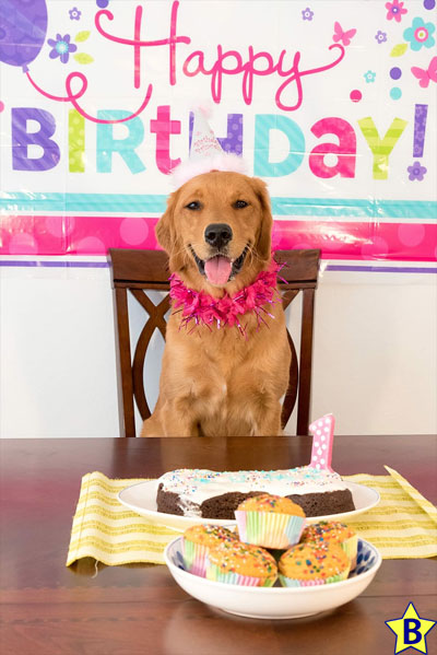 Happy Birthday Dog Images for Whatsapp