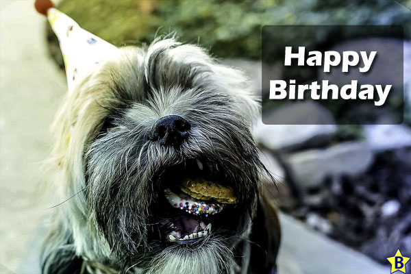 Happy Birthday Dog Images for mobile