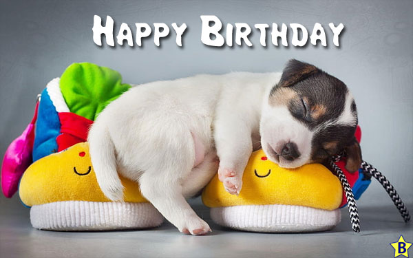 Happy Birthday Dog Images free download