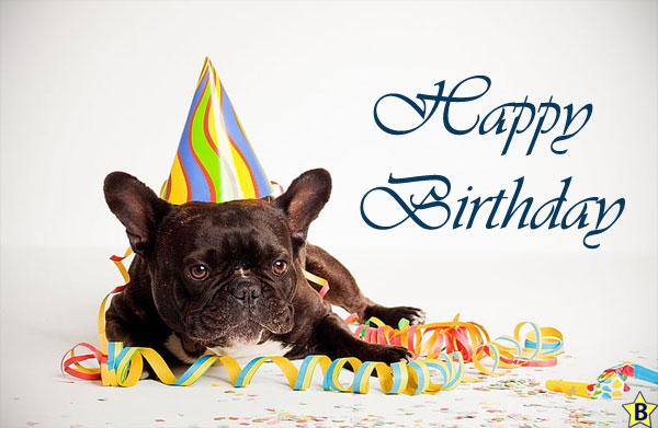 Happy Birthday Dog Images french-bull-dog