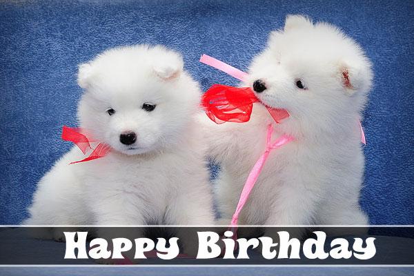 Happy Birthday Dog Images lover