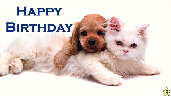 Happy Birthday Dog Images puppy-and-kitten