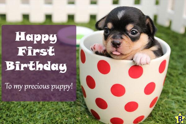 Happy Birthday Dog WIshes