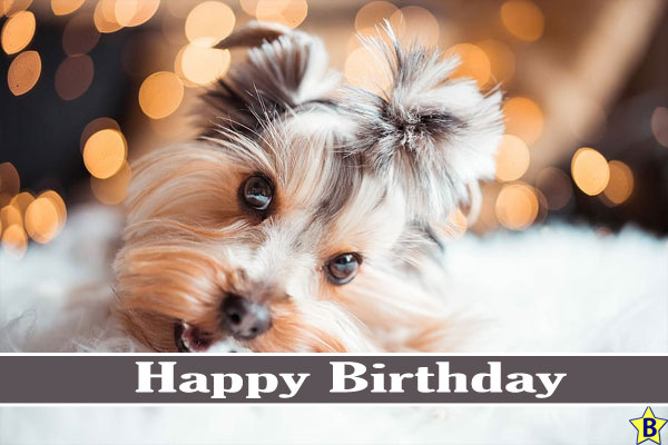 cute Happy Birthday Dog Images