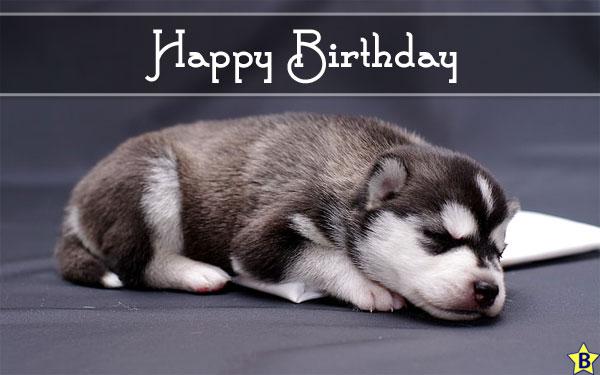 dog happy birthday funny images